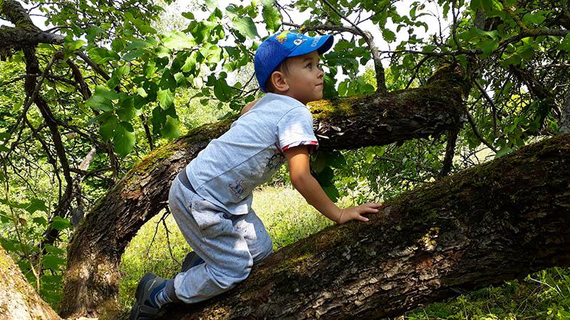 Яблоневый сад с шикарным видом на долину Десны