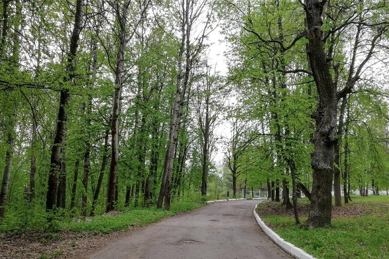 Аллеи в парке 1000-летия Брянска