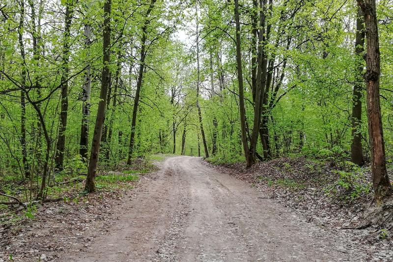 Аллеи в парке Соловьи Брянска