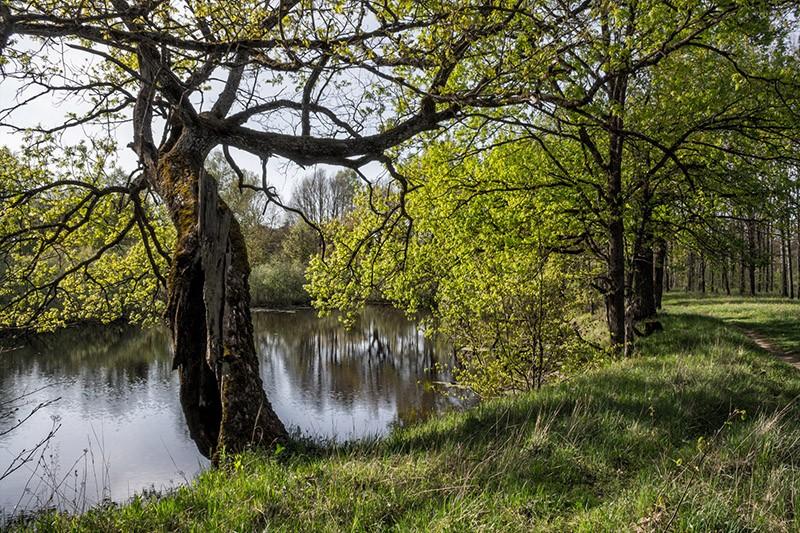 Лес Барсучья грива