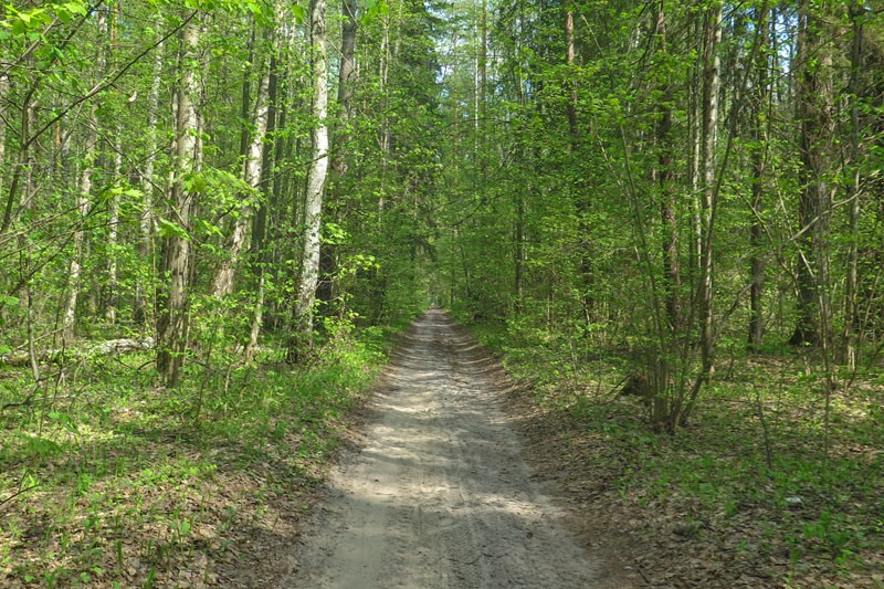 Володарский лес