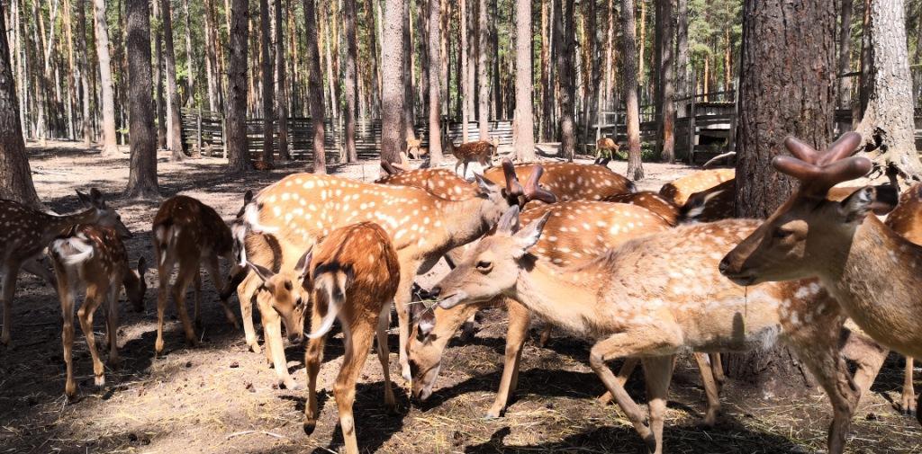 Зоовольерный комплекс орловского полесья