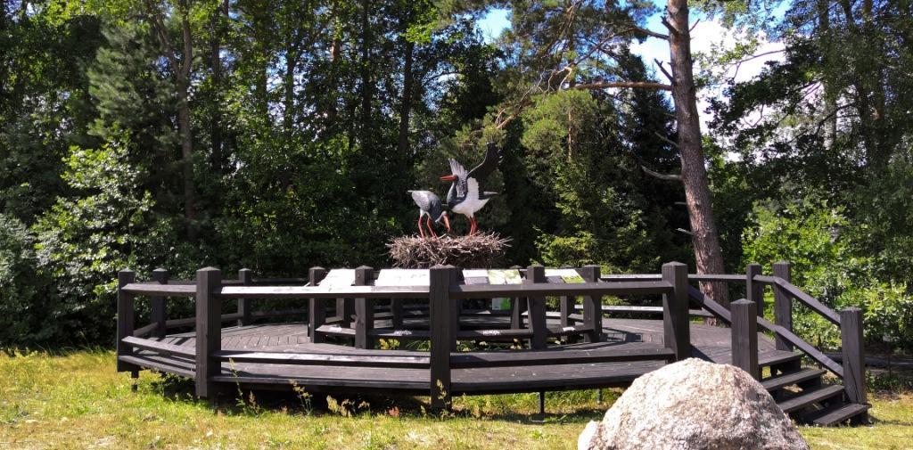 Заповедник Брянский лес