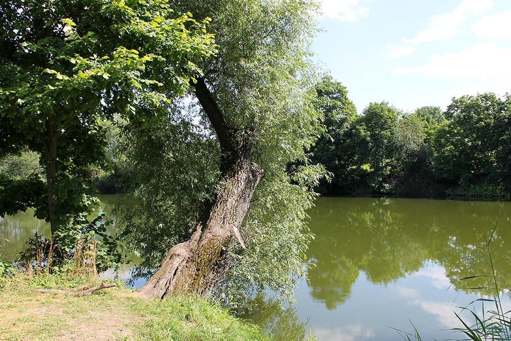 Большой пруд Ясная Поляна